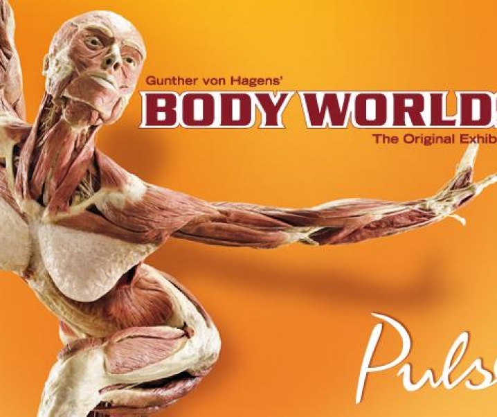 California Science Center presents: Body Worlds: Pulse Open Now thru Feb. 20, 2018